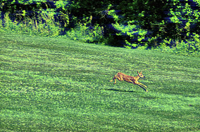 Photograph - White Tails At Dawn by Jamart Photography