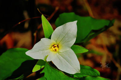 Photograph - White Trillium by Meta Gatschenberger