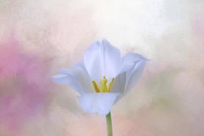 Photograph - White Tulip by Kim Hojnacki