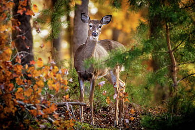 Photograph - Whitetail 4297 by Timothy Harris