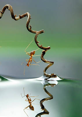 Ant Photograph - Who Are You by Teguhsantosa