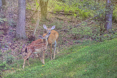 Photograph - Wild Affection by JAMART Photography