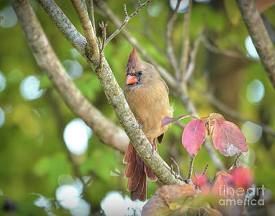 Abstract Expressionism - Wild Birds of Autumn - Female Northern Cardinal by Kerri Farley