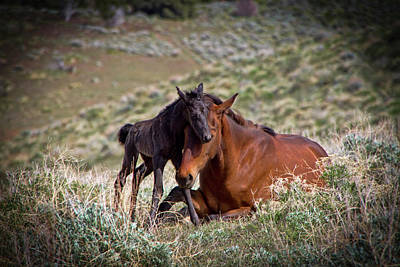 Wild Black New Born Foal And Mare Art Print