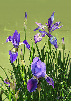 Digital Art - Wild Blue Flag Irises by M Spadecaller