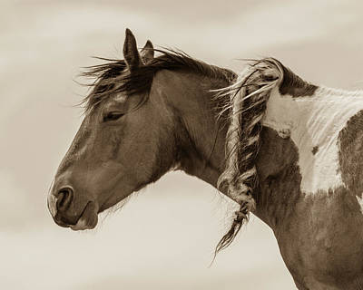 Photograph - Wild Braids 2 by Mary Hone