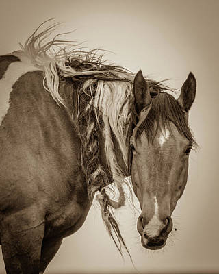 Photograph - Wild Braids by Mary Hone