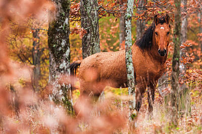Animals Royalty-Free and Rights-Managed Images - Wild by Evgeni Dinev