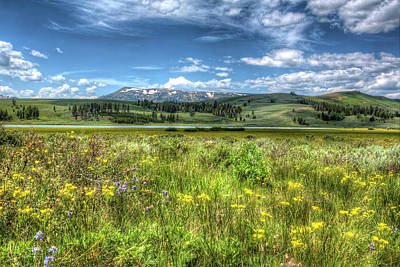 Photograph - Wild Flowers in a Meadow in Yellowstone by Don Johnston