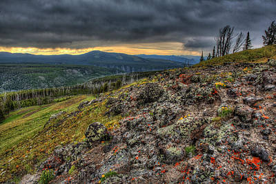 Photograph - Wild Flowers on a mountain Top in Yellowstone  by Don Johnston