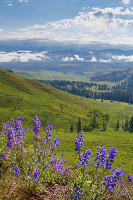 Photograph - Wild Flowers  Yellowstone National Park by Don Johnston