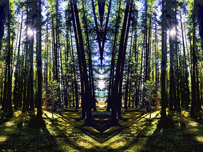 Photograph - Wild Forest #1 by Ben Upham III