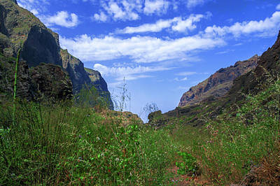 Photograph - Wild Grasses In The Masca Gorge by Sun Travels