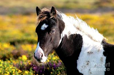 Sean Rights Managed Images - Wild horse  Royalty-Free Image by Debra Angel