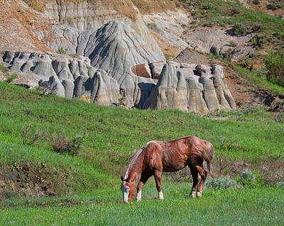 Wall Art - Photograph - Wild Horse Grazing - Theodore Roosevelt National Park by Martin Belan