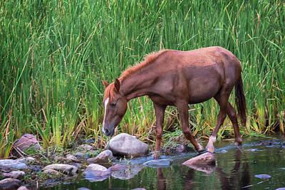 Photograph - Wild Horse Salt River by Dave Dilli