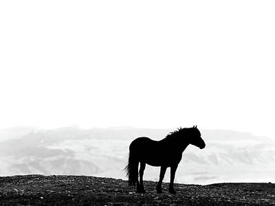 Photograph - Wild Horse Silhouette Bw by Leland D Howard