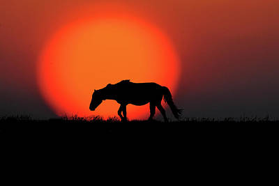 Photograph - Wild Horse Walking In Front Of Sun  Paintography by Dan Friend