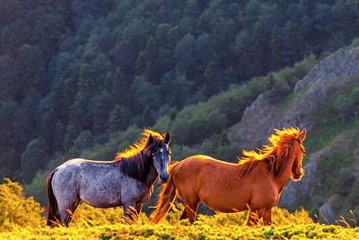Animals Royalty-Free and Rights-Managed Images - Wild Horses by Evgeni Dinev