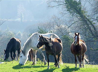 Photograph - Wild Horses Kerry by Pauline Christie