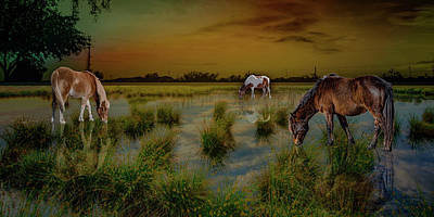 Photograph - Wild Horses by Paul Wear
