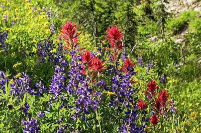 Photograph - Wild Lupine And Paintbrush by Kathleen Bishop