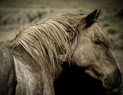 Photograph - Wild Mustangs Of New Mexico 13  by Catherine Sobredo