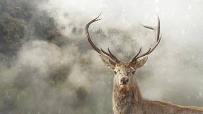 Photograph - Wild Nature - Stag by Andrea Kollo