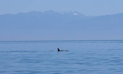 Photograph - Wild Orca - 2 by Christy Pooschke