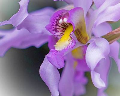 Photograph - Wild Orchid by Susan Rydberg