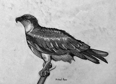 Drawings Royalty Free Images - Wild Osprey In Pencil Royalty-Free Image by Michael Panno