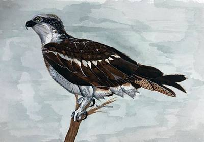 Animals Paintings - Wild Osprey by Michael Panno