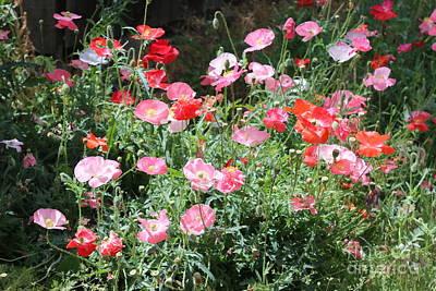 Photograph - Wild Poppies In Sunlight by Carol Groenen