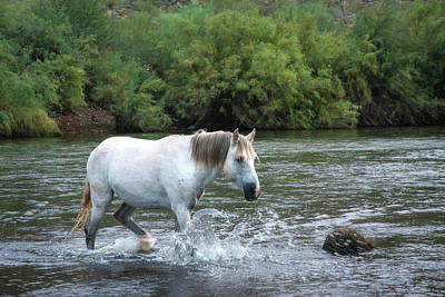Photograph - Wild Salt River White Horse by Dave Dilli