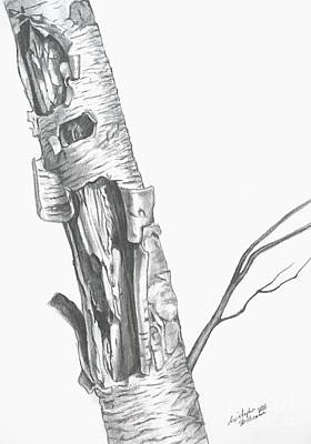 Drawing - Wild Single Birch Tree by Christopher Shellhammer