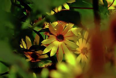 Photograph - Wild Sunflower by Brad Chambers