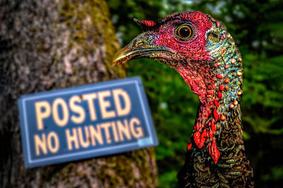 Photograph - Wild Turkey No Hunting by Bob Orsillo