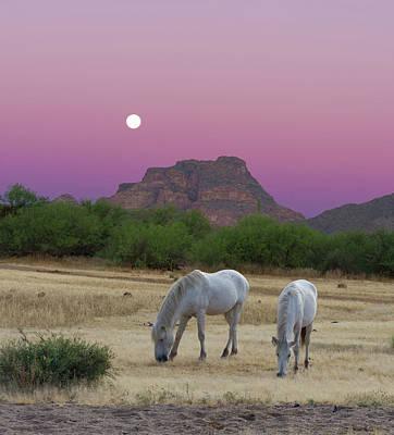 Photograph - Wild White Horses at Sunrise by Barbara Sophia Travels