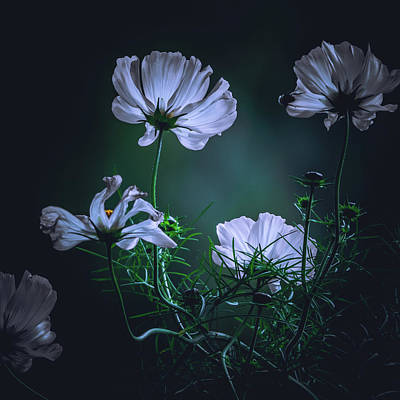 Photograph - Wild Wind Flowers by Bob Orsillo