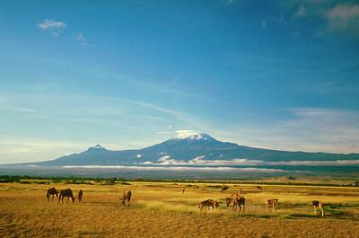 Scenery Photograph - Wildebeest Grazing, Ambos Eli National by Myloupe/uig