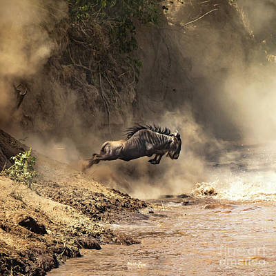 Photograph - Wildebeest Leaps From The Bank Of The Mara River by Jane Rix