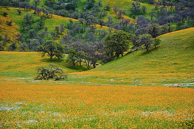 Photograph - Wildflowers Central Valley by Kyle Hanson