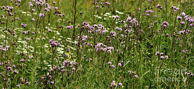 Beastie Boys - Wildflowers by Esko Lindell