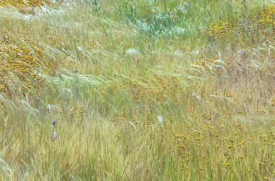 Photograph - Wildflowers Field 2 by Jonathan Nguyen