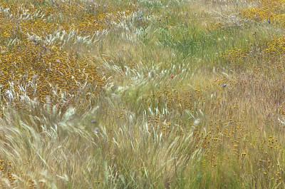 Photograph - Wildflowers Field  by Jonathan Nguyen
