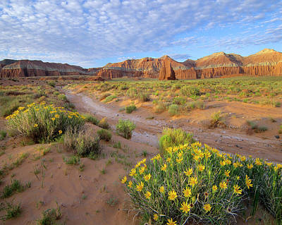 Photograph - Wildflowers Growing Along Dirt Road by Tim Fitzharris/ Minden Pictures