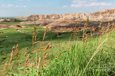 Photograph - Wildflowers In The Badlands by Sheila Skogen