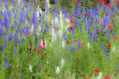 Photograph - Wildflowers In The Rain by Mark Duehmig
