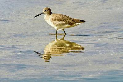 Photograph - Willet  by Susan Rydberg