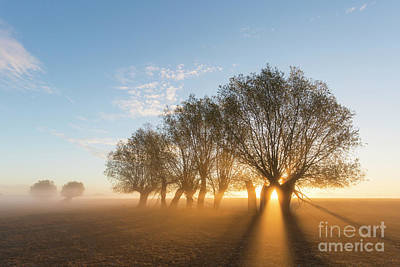 Photograph - Willows by Arterra Picture Library
